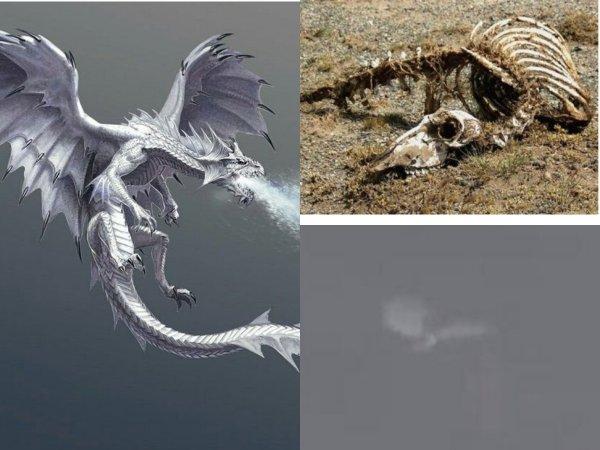 Дракон-пришелец с Нибиру мог и ранее посещать Землю