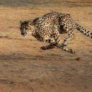 Размер тела влияет на скорость животных — учёные