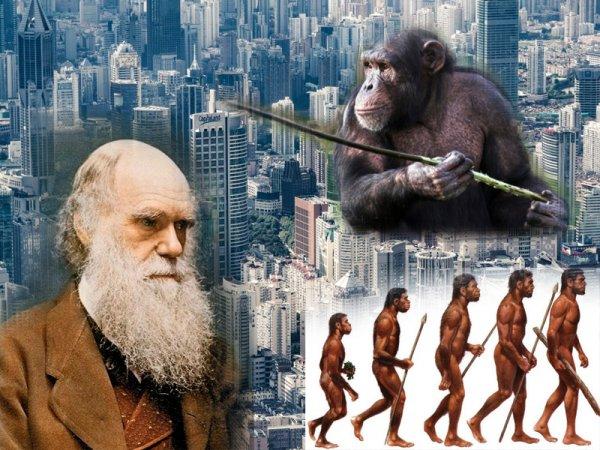 У людей вырастут хвосты? Человек может превратиться обратно в обезьяну