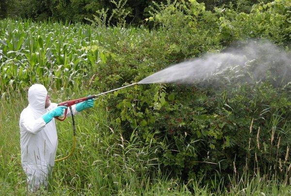 Пестициды – яд? «Безвредные» вещества вызывают серьёзные мутации у диких животных