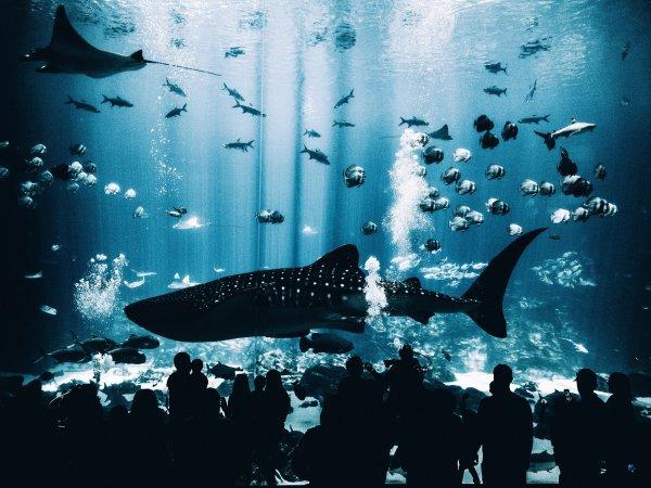 Названа жизненно важная для людей причина сохранения морских животных