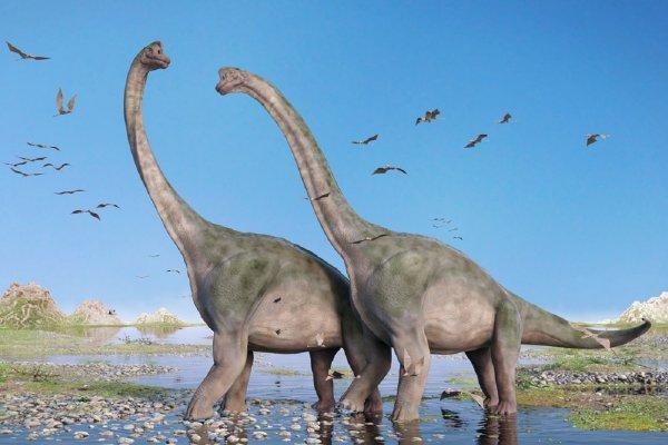 Человечество произошло от шизофреников-рептилоидов — найдены останки динозавров