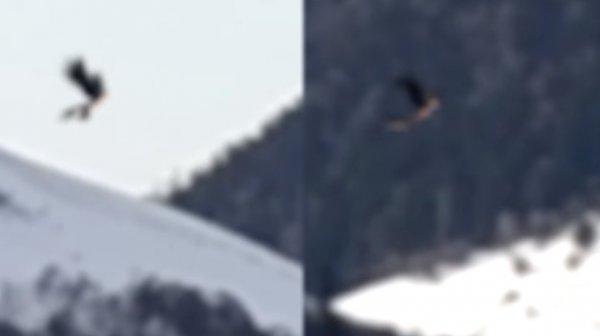 Гоблин-пришелец с Нибиру скрывается в Сибири — Существо с синей кожей и «горящими» глазами напугало охотника