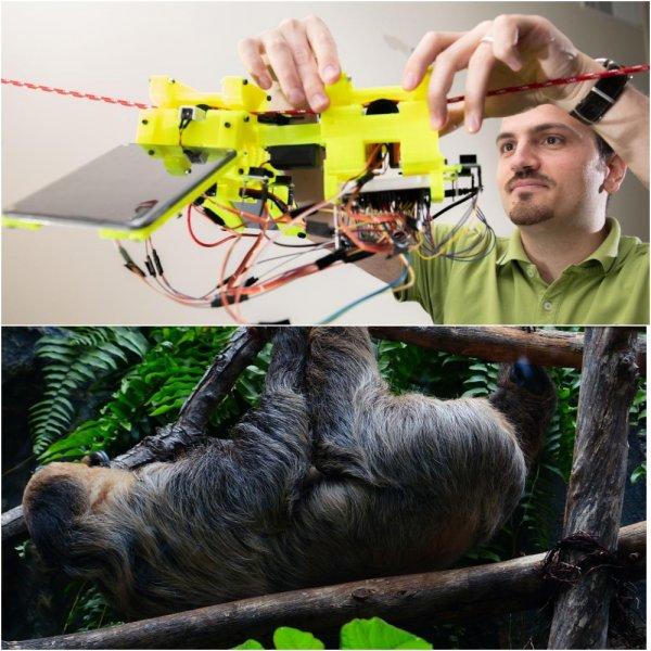 Ученые создали робота-ленивца