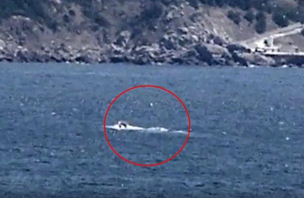 Детеныш змея-людоеда. В Черном море засняли 30-метрового монстра
