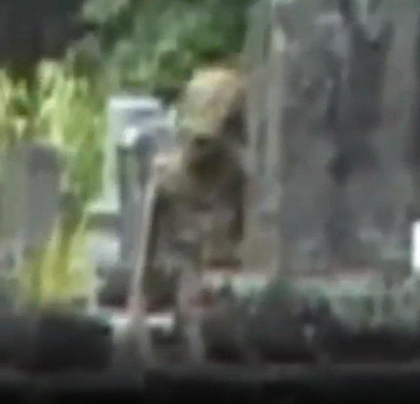 Добби нужен гроб — Эльф-пришелец с Нибиру напал на сторожа кладбища