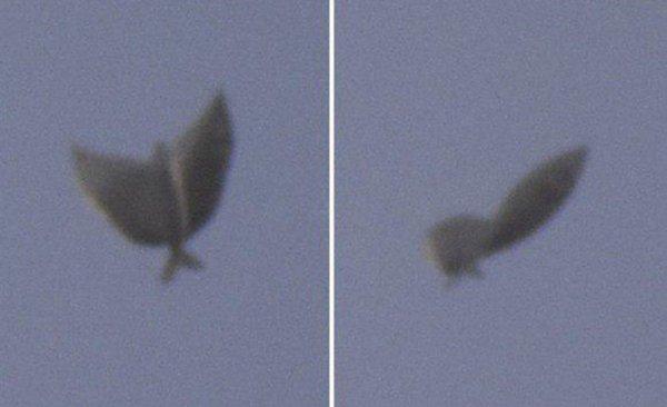 «Нибируианская Кракозябра!» — Россиянина поразила встреча с крылатой рыбой-упырём