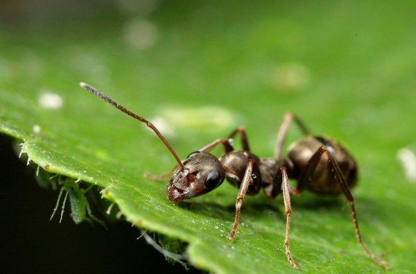 Всё как у людей: ученые выяснили, как «профессия» муравья влияет на его интеллект