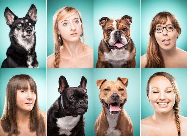 Учёные подтвердили способность собак чувствовать человеческий стресс