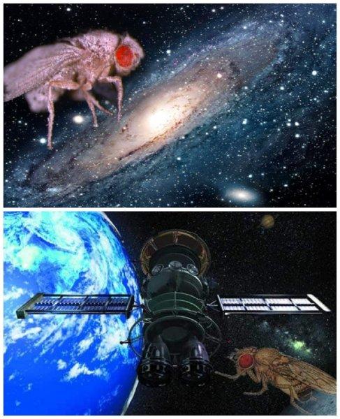 Мухи-пришельцы: Мутировавшие насекомые активно размножаются в космосе