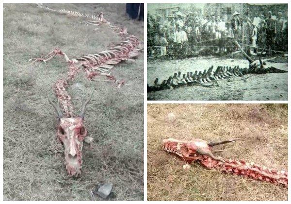 ПВО России сбило дракона Нибиру - Под Волгоградом нашли скелет 20-метрового ящера