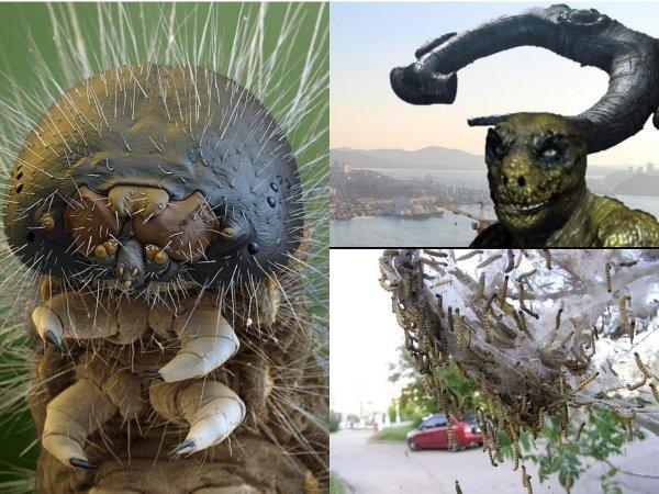 Нибиру применила биологическое оружие: Ядовитые гусеницы пожирают растения и нападают на россиян