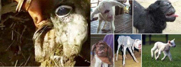 Ванга была права: Пророчество о гибели животных уже сбывается – дальше голод