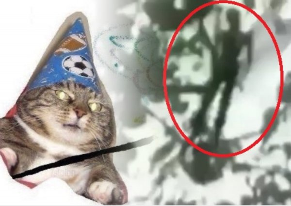 Вжух — и пришелец! Фея-инопланетянин напугала детей в лесу