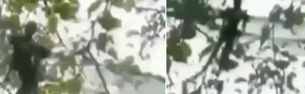 Вжух - и пришелец! Фея-инопланетянин напугала детей в лесу