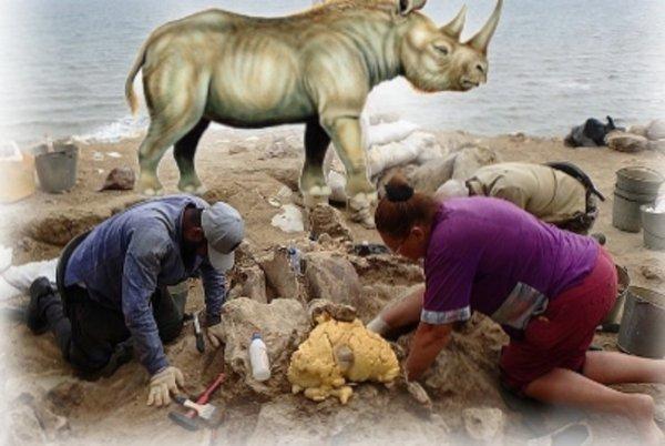 Заповедник рептилоидов найден в Крыму? Возле Керчи нашли труп 5-тонного носорога
