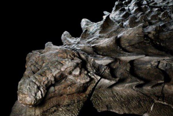 В пирамиде открылась тайная комната! Учёные обнаружили мумию дракона