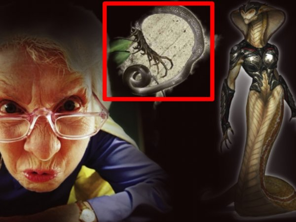 Царица рептилоидов пробудилась: В Дагестане пенсионерка поймала принца Нибиру