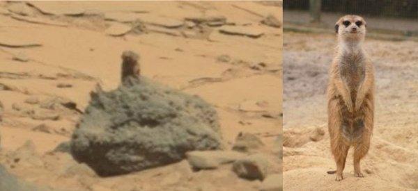 Сгорел, как шашлык! Обугленное тело пришельца с Марса найдено в Калининской АЭС