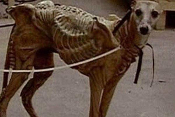 Пришельцы прячутся в собаках! «Подменённый» домашний питомец может быть смертельно опасен для хозяев — эксперт