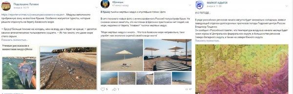 Нибиру атакует Чёрное море: Крым «кишит» ядовитыми медузами-гигантами с Планеты Х