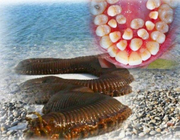 «Жрун» с Нибиру напал на людей: После укуса пришельца у мальчика выросли зубы червя