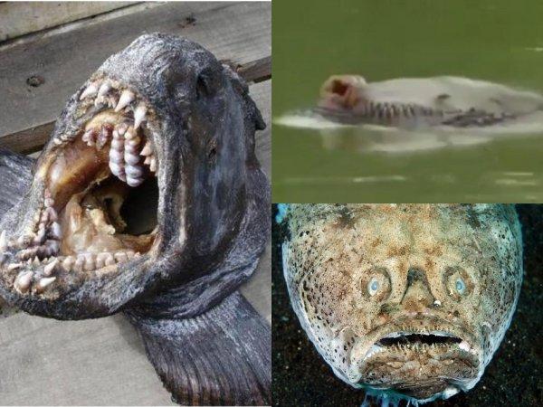 Рыбу не есть, в воду не лезть! Паводки смыли радиацию из Иркутска в Байкал