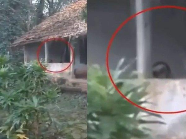 Туристы под угрозой: Чеченский свинорыл прячется в домах и грабит людей