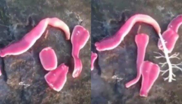 Бесхребетус с Нибиру: «Гламурные» глисты-мутанты атакуют женщин Земли ради иннервации мозга