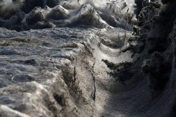 В Крыму паук-людоед напал на туристов: Жуткие 1,5-метровые твари плодятся под скалами