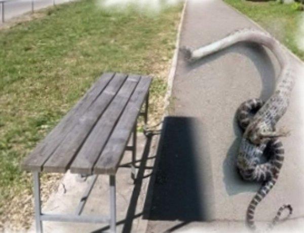 В Чернобыле поймали 4-метрового человека-змея, нападающего на туристов