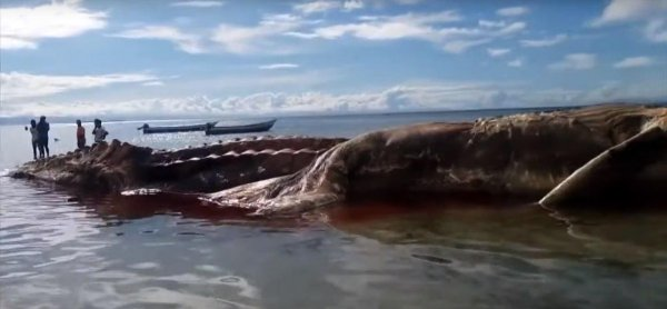 Туристы в безопасности: Российские ВКС сбили Дракона с Нибиру в Крыму