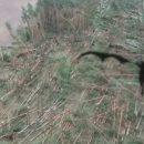 Сибирский дракон вернулся! чудовище с Нибиру повалило тысячи деревьев в Гомеле — эксперт