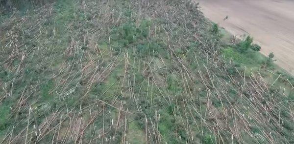 Сибирский дракон вернулся! чудовище с Нибиру повалило тысячи деревьев в Гомеле - эксперт
