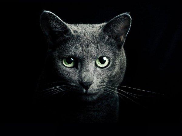 «Страшнее кошки зверя нет!» Доказано, что домашние любимцы порабощают разум хозяев – эксперт
