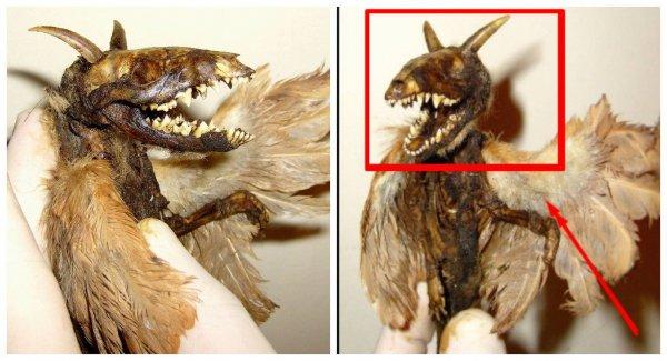 Жительница Перми 30 лет хранила мумию дракона на чердаке