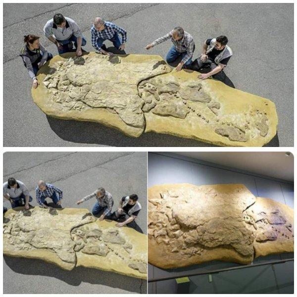 В  Перу нашли древнюю мега-акулу - Пришельцы воскрешают динозавров?