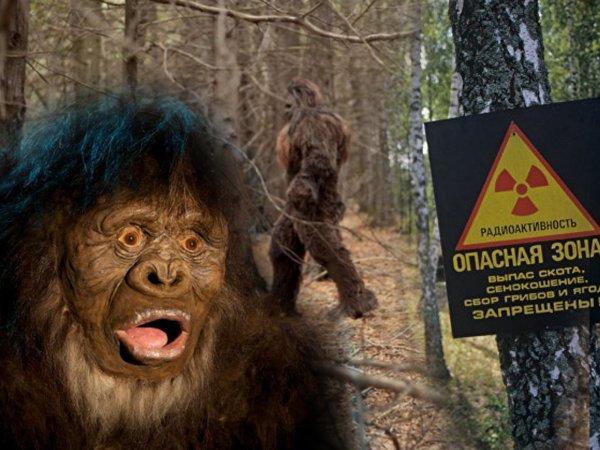 Раскрыта тайна Чернобыля! Первые сталкеры превратились в волосатых гигантов