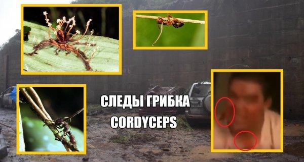Грибковые зомби в Приморье: Владивосток затоплен по вине Нибиру