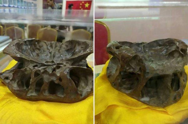 Живой орган с Нибиру. В России нашли настоящий череп инопланетянина