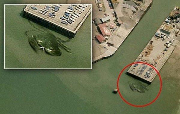 Морской царь напал на США! 15-метровый краб обнаружен на Восточном побережье Штатов