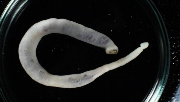 Что скрывает Курило-Камчатский желоб? На Камчатке найден желудок пришельца