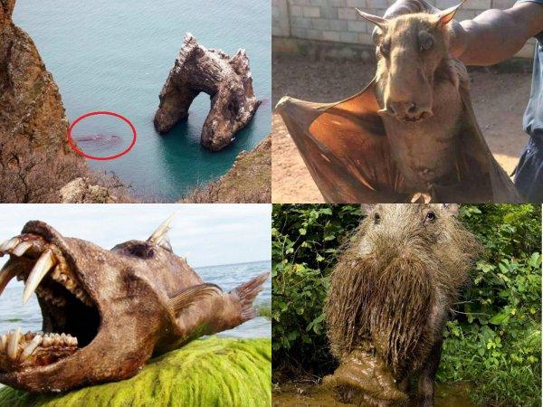 Разорвут как Тузик грелку: Жуткие твари с Нибиру захватили Чёрное море