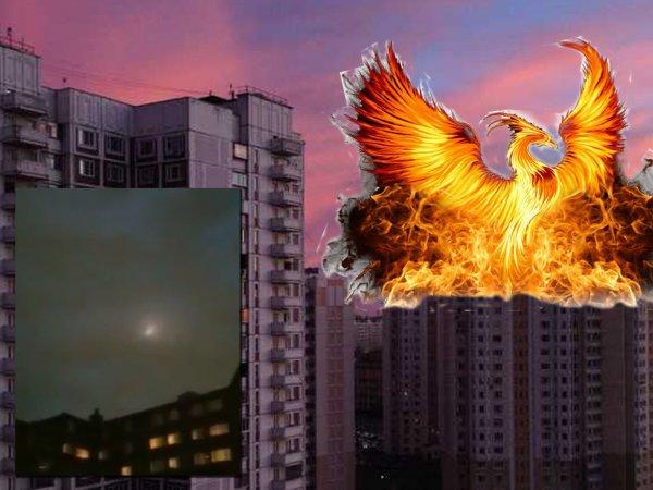 Крылатый поджигатель: Феникс с Нибиру устроил массовый пожар в Севастополе