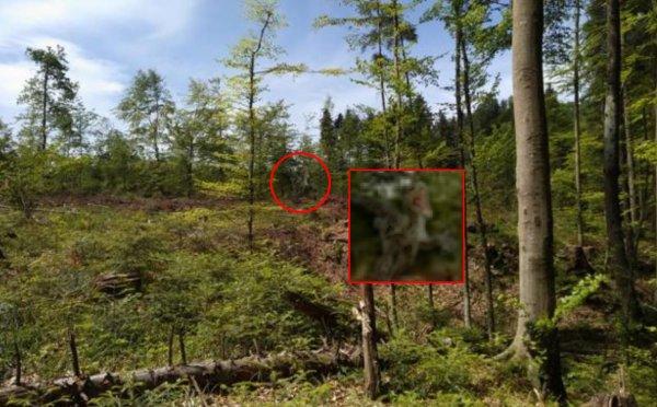 Доисторический кошмар! «Вымерший» динозавр напал на туристов в Крыму