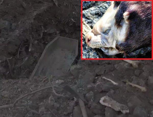 Пушистые потрошители атакуют Чернобыль: На кладбище засекли чупакабру за пиршеством