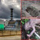 Восстание Голлумов: Потерянный ликвидатор разрыл могилу в Чернобыле