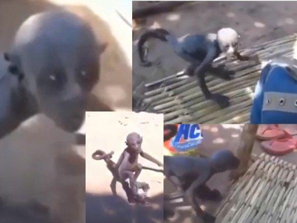 В Монголии родился принц Нибиру: Женщина воспитала необычного ребёнка-примата