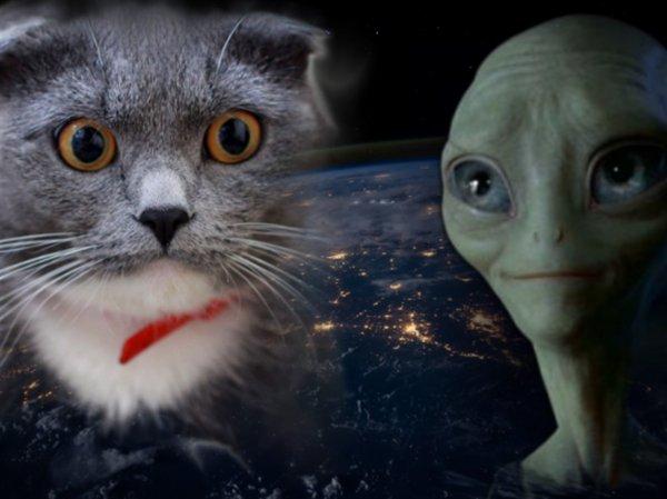 Зоофилы с Планеты Х: Пенсионерка показала оплодотворённого пришельцами кота