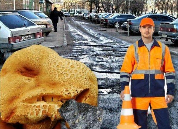 Тайна плохих дорог раскрыта: Асфальт в России едят инопланетные шампиньоны